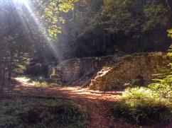 The Redwoods